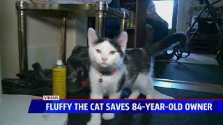 Cat saves man's life after fall