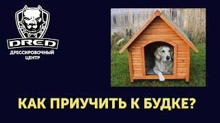 Как приучить собаку к будке?Научить жить в будке!