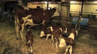 Un Savoureux Voyage au Pays du Comté - 2012 - Episode 4.4 -
