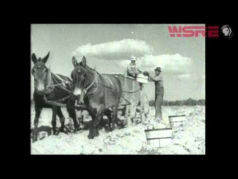 Vanishing Occupations: Black Farmers   AWARE!   WSRE