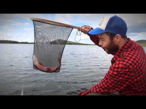 Ett fiskeår längs Vindelälvsdalen - del 4