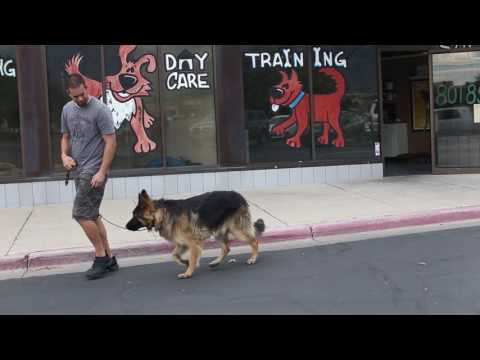 Transformations- How to Train an Aggressive German Shepherd- Utah Dog Trainers
