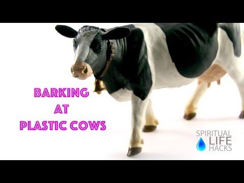 Barking At Plastic Cows