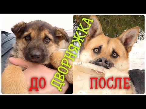 Вопрос: Породистая собака случилась с непородистой, что делать со щенками?