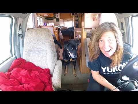 Alaska Road Trip:  A Grizzly Bear and a Crash...