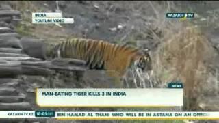 Тигр-людоед держит в страхе 15 тысяч человек