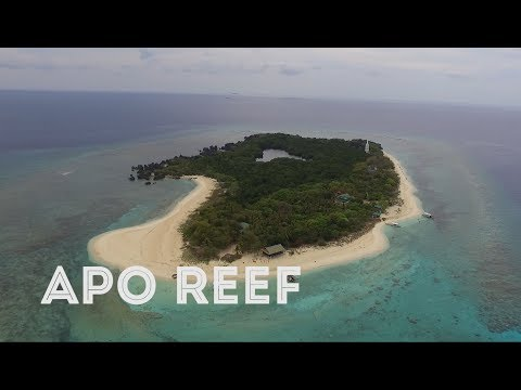 Apo Reef Travel Guide (Commuters Guide)