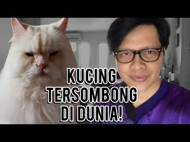 Armand Maulana - Kucing Tersombong di Dunia