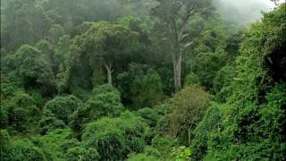 Welcome Congo Rain Forest, Africa