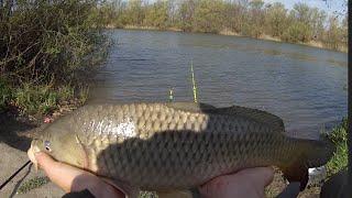 Ловля карпа на флет фидер на реке Днестр