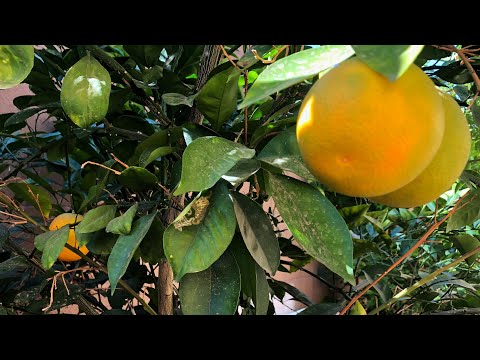 WHEN LIFE GIVES YOU LEMONS!! | Light The World Day 4 |