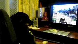 Шкода !!!-собачка нагибатор!!!(, 2011-11-23T18:11:03.000Z)