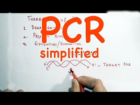 PCR-Polymerase Chain Reaction