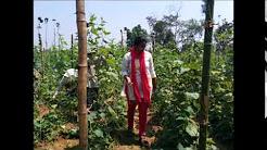 NRI woman returns to India, starts farming: Kranthi Paturi