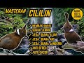 Suara Masteran Cililin Nembak Rapat Jeda Terapi Air Alam Anti Stres  Mp3 - Mp4 Download