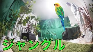 【ドッキリ】友達の家を勝手にジャングルにしてみた thumbnail
