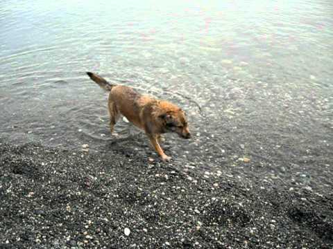 Cani divertenti la mia missy al mare youtube for Cani al mare