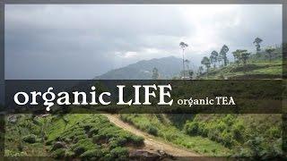 Organic LIFE tea production Sri Lanka