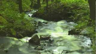 Shenandoah - Alto (Treble) Recorder