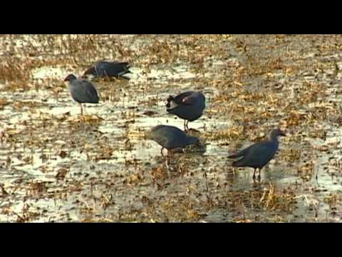 Keoladeo Ghana Vacation Travel Video Guide