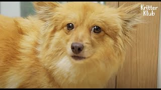 """I'm Still Scared Of Humans.."" Could This Dog Make A Smile Again? (Part 2) 