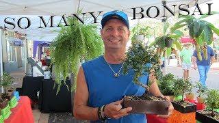 Lou S Bonsai At The Sarasota Farmers Market Youtube