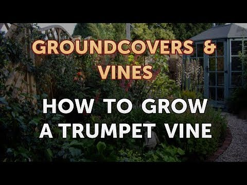 How to Grow a Trumpet Vine
