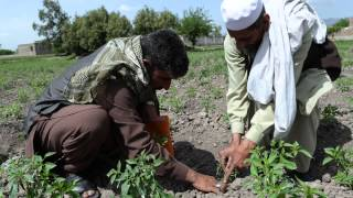 Simple solutions to hunger -- an Afghan village transformed