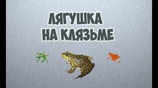 Русская рыбалка 3.99 Лягушка на клязьме.