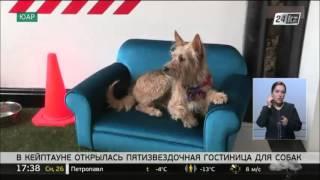 Пятизвездочная гостиница для собак открылась в Кейптауне