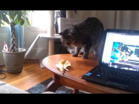 Cat Frightened By Random Object