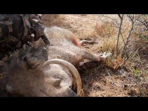 Episode 3 - Hunter hunts an African Boar with a Glock 19