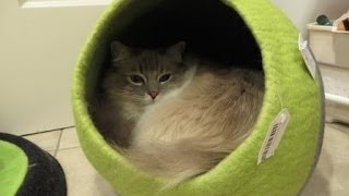 Designer Cat Beds: Lollycadoodle Wool Cat Beds from The Cat Connection - ねこ - ラグドール - Floppycats
