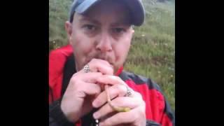 Dandelion trumpet man