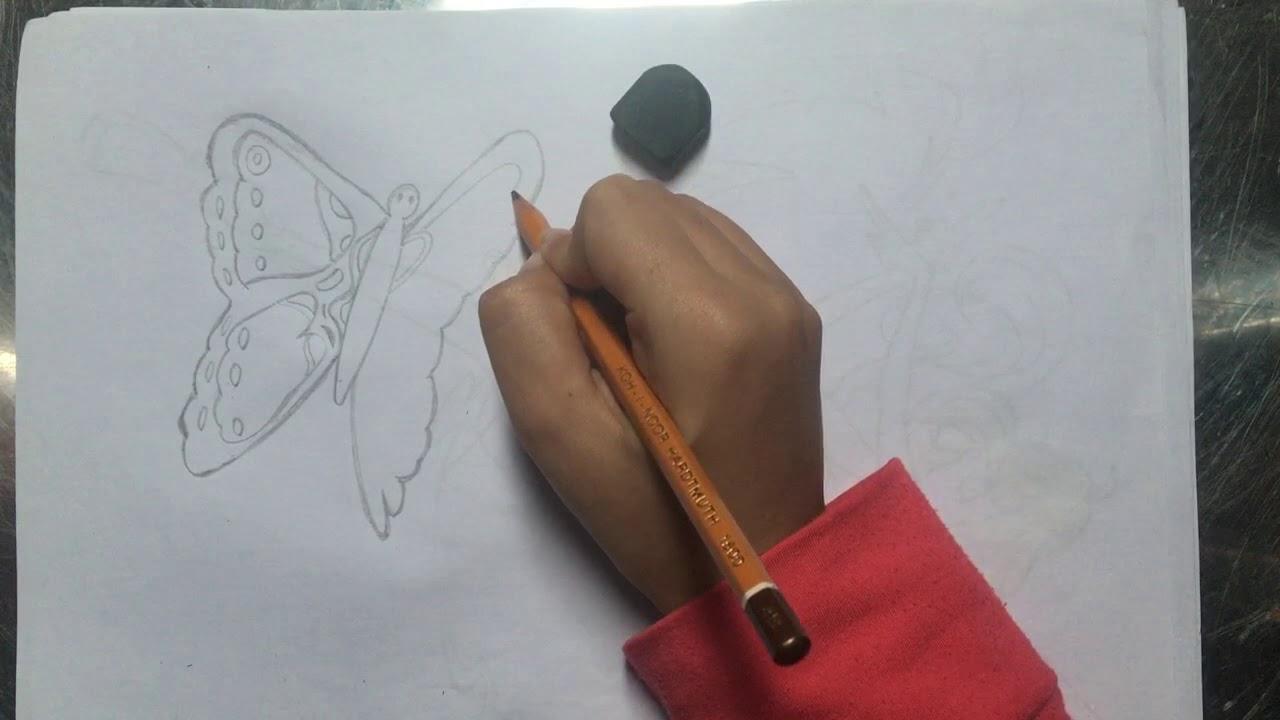 Vẽ con bướm bên hoa cẩm chướng 1