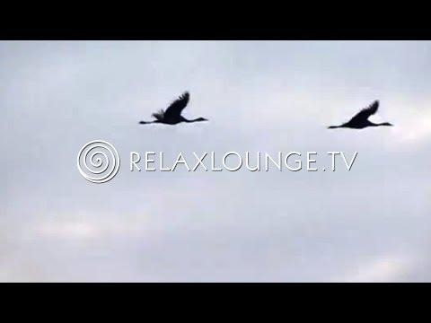 Nature Videos - Orchestra Music, Classic & Instrumental Music - FASZINATING CRANES