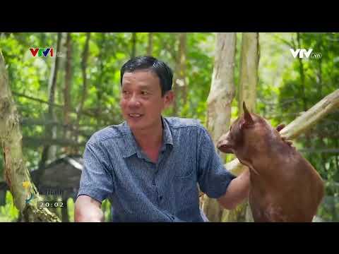S - Việt Nam - Trang trại đặc biệt ở Phú Quốc - Trang trại chó Phú Quốc