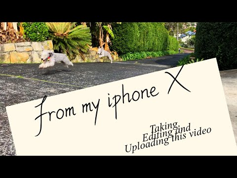 Made this video from my iphone X Bedlington terrier