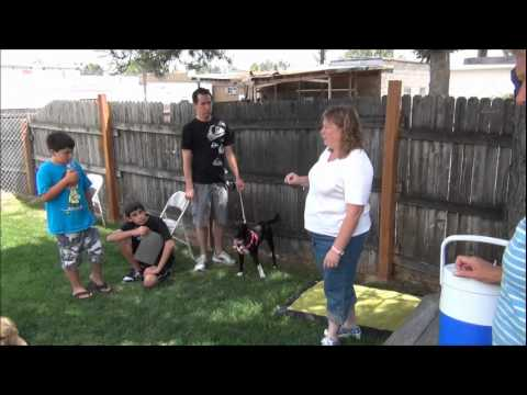 Puppy Kindergarten at Full Circle Veterinary Care
