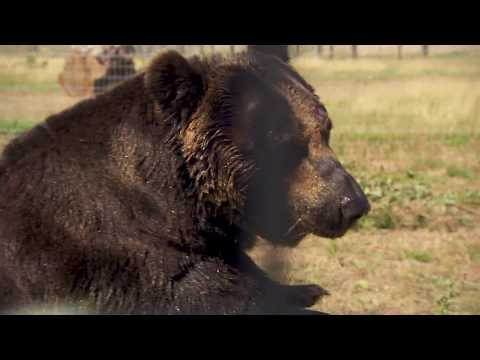 Rescued Brown Bears find new home at Yorkshire Wildlife Park
