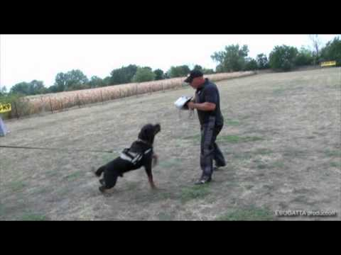 Bite Wedge, Bite Pad / Police Dog Training,  Kode: 144BK-W