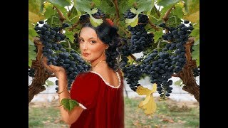 Виноградная косточка - /Kikabidze Vahtang - Vinogradnaya kostochka/