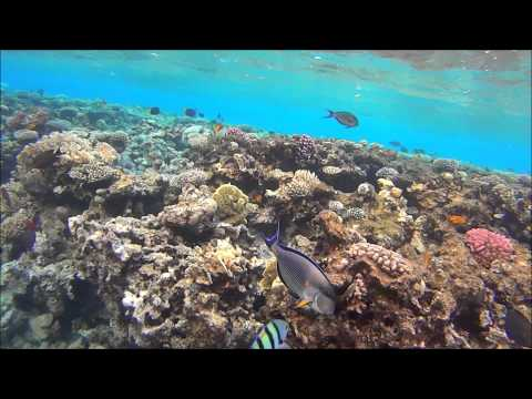 Egypt, Sharm el-Sheikh, Coral Reef, Fishes [1080p]