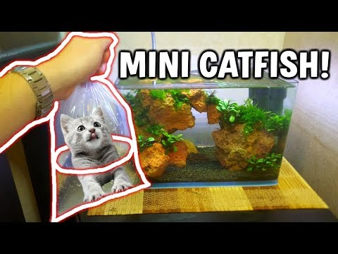 ADDING MINI CATFISH TO AQUARIUM!
