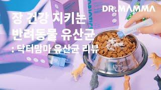 강아지 고양이 유산균 리뷰: 닥터맘마 프로바이오틱스 먹…