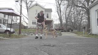 Best Dog Training Bootcamp Cincinnati - German Shepherd Basic Obedience Training New