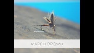 Tying a Dryfly March Brown by 6piedsurleau
