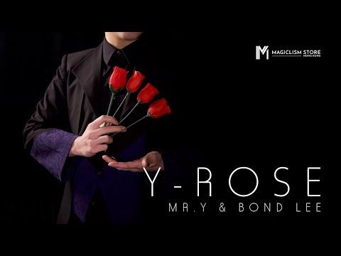 Y Rose by Mr. Y & Bond Lee