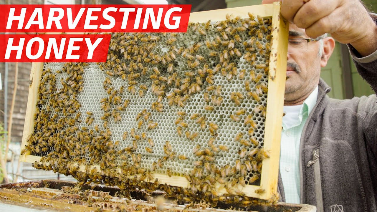 How Khaled Almaghafi Makes Honey From 10 Million Bees in California's Bay Area — First Person