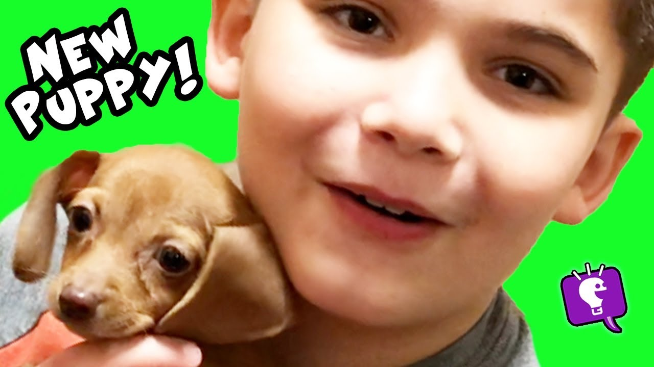 We Get a NEW PUPPY! What Should HobbyKids Name It?